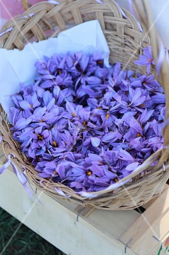 A basket of saffron flowers