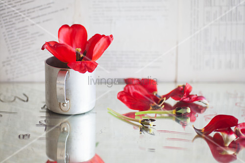 Red tulip in metal mug next to scattered petals and stems