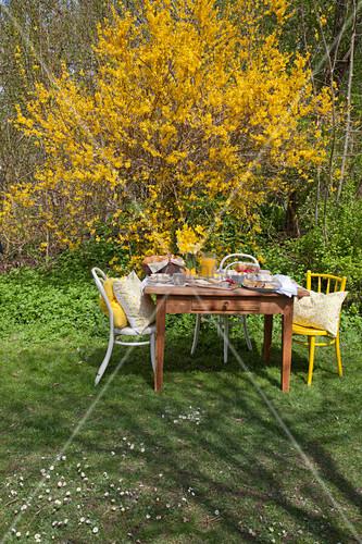 Table set for Easter breakfast in front of flowering forsythia in garden