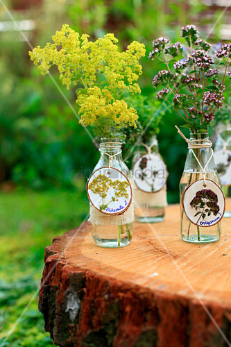 Garden herbs in glass bottles with tags made from wooden discs