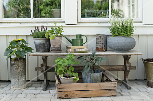Potted plants on old wooden bench on terrace