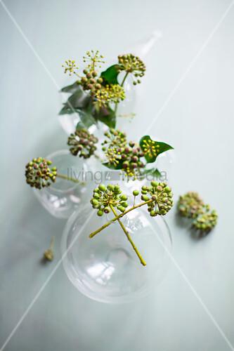 Efeubeeren in kugelförmigen Glasvasen auf grauem Grund