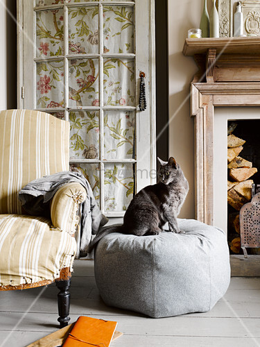 Cat sitting on grey pouffe in vintage-style living room