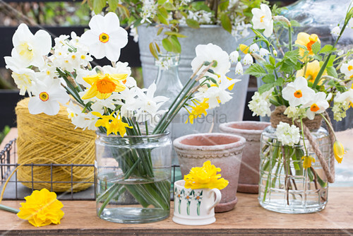 Various types of narcissus in glass vases and mug
