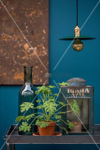 Scented pelargonium in terracotta pot between bottle and old lantern