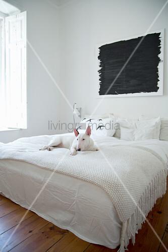 Hund auf Doppelbett mit weißer Decke, darüber schwarzes Bild im Schlafzimmer mit Holzdielenboden