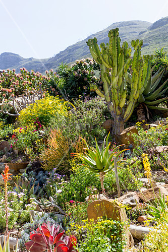 Cacti and succulents in exotic rock garden