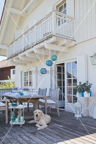 Dog lying next to set table on summery terrace