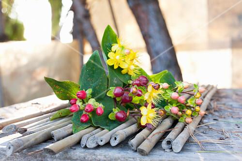 Johanniskraut (Hypericum perforatum), mit Beeren und Blüten auf Bambusstäbchen