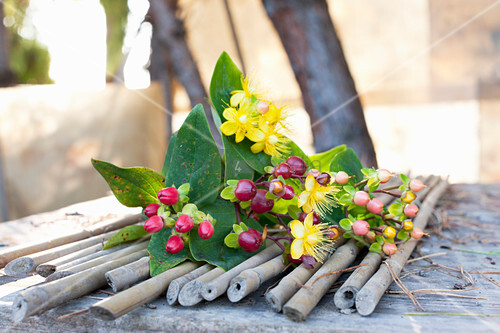 St. John's wort (Hypericum perforatum) with berries and flowers lying on bamboo canes