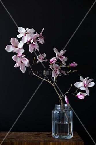 Sprig of flowering magnolia in jar of water