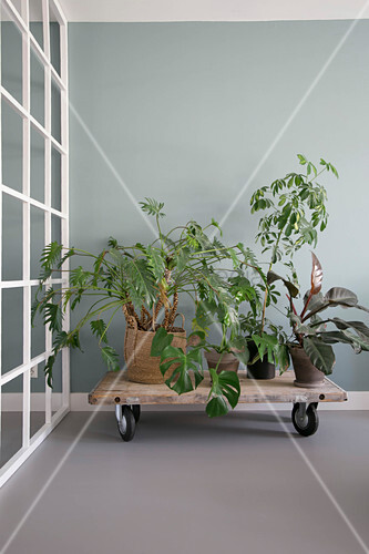 Various houseplants on low table on large castors