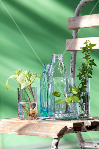 Bottles and cut-off bottle bottoms used as vases