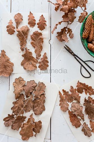 Dried oak leaves on paper