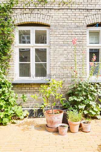 Plants in terracotta pots against sunny outside wall