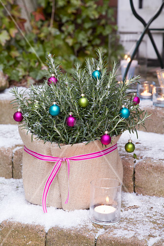 Potted rosemary decorated with small baubles and wrapped in hessian sack