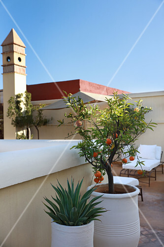 Potted tangerine tree and potted succulent on roof terrace