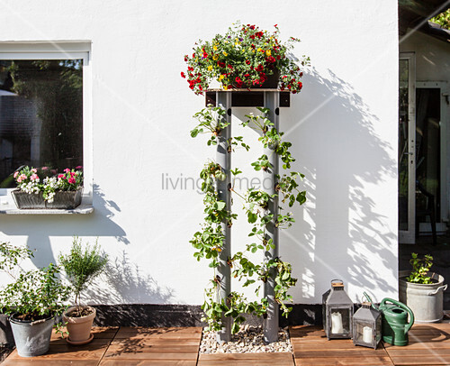 Strawberries and flowering plants on DIY plant stand