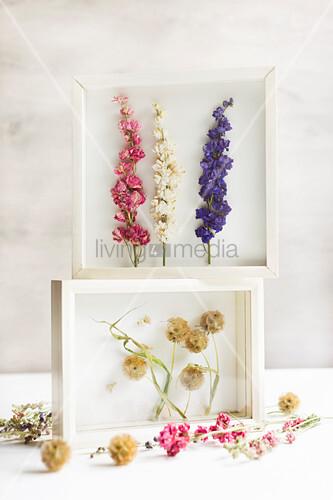 Getrocknete Blumen in weißen 3D-Rahmen