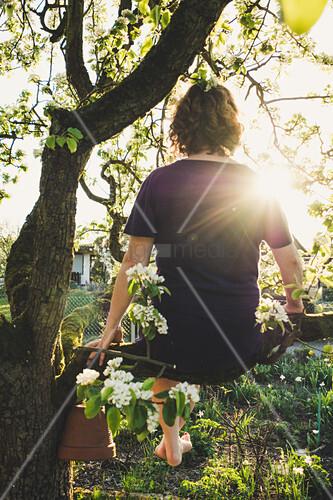 Woman sitting in tree in sunshine