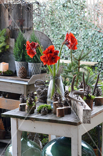 Christmas Decoration With Amaryllis, Cones And Antlers