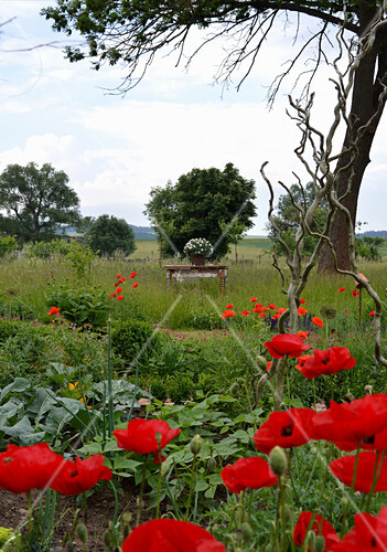 View From The Farm Garden With Poppies On Table In The Meadow