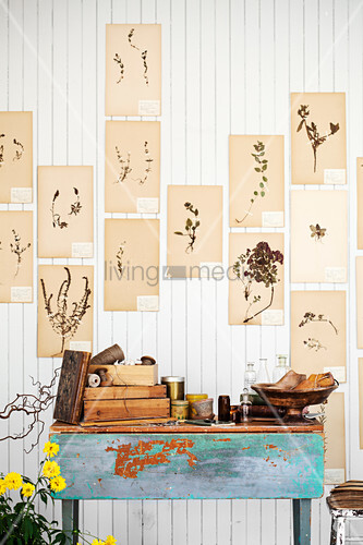 Vintage botanical illustrations on white-painted wooden wall above various utensils on wooden table