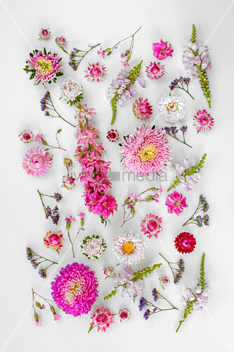 Tableau of pale and deep pink flowers