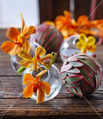 Blüten von Vanda-Orchidee in Glaskugeln