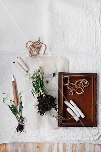 Snowdrops with root ball next to candles on wooden tray