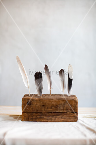 Federn stecken in einem alten Stück Holz vor weißem Hintergrund