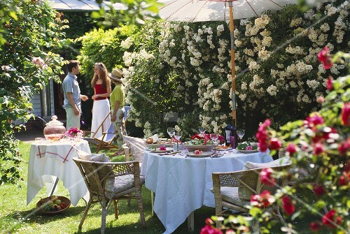 Garden table laid for party in front of cascade of white roses
