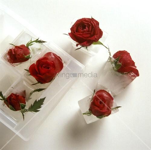 Eiswürfel mit roten Rosen