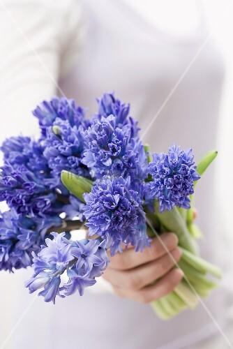 Frau hält blaue Hyazinthen