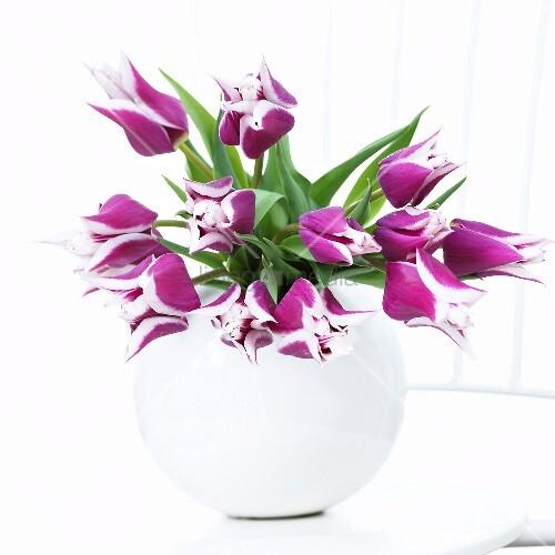 tulpen 39 claudia 39 in vase bild kaufen 00273617 living4media. Black Bedroom Furniture Sets. Home Design Ideas