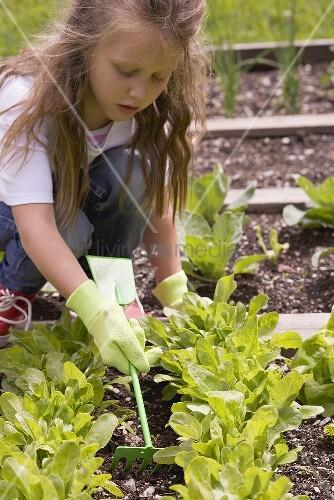Kleines Mädchen lockert die Erde im Gemüsebeet