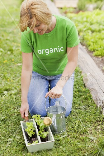 A woman kneeling in a vegetable patch with lettuce plants and a watering can