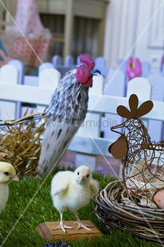 Live chicks and Easter decorations