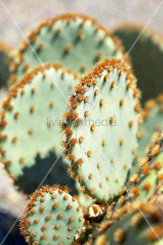 Cactus (detail)