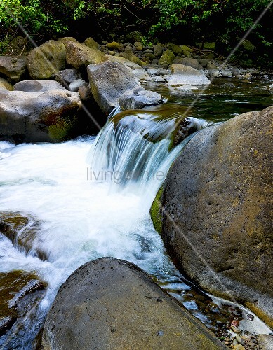 Waterfall in Fresh Water Stream in Hawaii