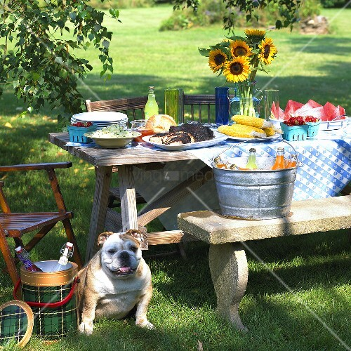Summer Picnic Set on an Outdoor Picnic Table; Bulldog