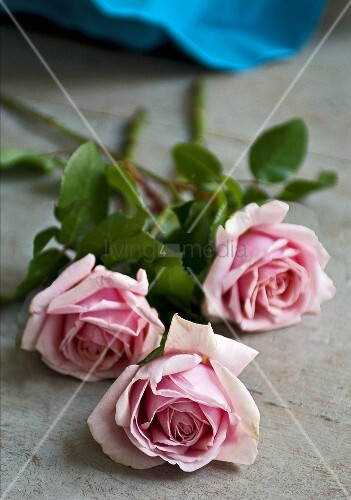Three roses on a wooden surface